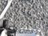 Triumph Scrambler 1200 XE_14.JPG